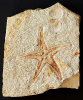 03 - Fossil des Monats März 2021