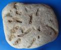 Ausgleichsspuren (Equilibrichnia)