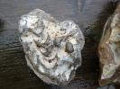 Fressspuren (Fodinichnia)