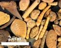 Mikrofossilien aus dem Sternberger Gestein