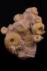Ammonitenstufe