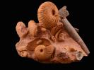 Macrocephalites sp., Alcidia sp.