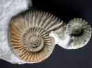 Ammonitenskulptur