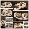 Stufe mit Ammoniten
