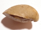 Argovithyris stockari