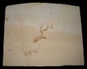 Leptolepides sprattiformis (Fischleinflinz)