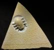 ?Aspidoceras hoplisum (OPPEL)