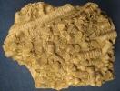 cf. Seirocrinus