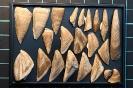 Verschiedene Platten von Cirripediern
