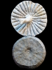 Coeloptychium agaricoides (GOLDFUSS 1826)