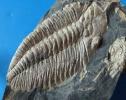 Ordovizium