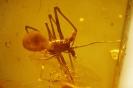 Arachnida Archaeidae