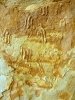 Reptilfährten indet. cf. Amphisauropus