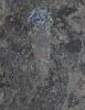 Apateon dracyiensis