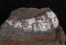 Calophyllum columnare Schlotheim