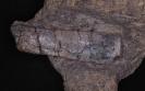 cf. Parasaurus geinitzi