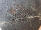 Kyphosichthys grandei Xu & Wu, 2012