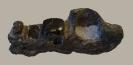 Placodus gigas (AGASSIZ, 1833)
