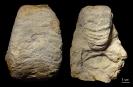 Germanonautilus dolomiticus