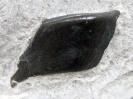 Colobodus sp. (Schuppe)