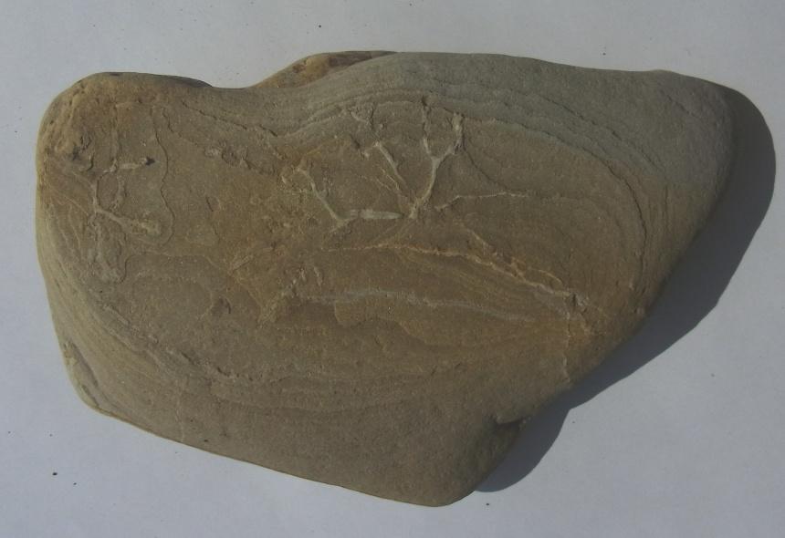 Radiokarbondatierung von Fossilien aus