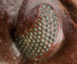heft23 phacopode komplementaerkontrast linsen
