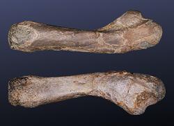 heft23 placodus femur ostwestfaelisches bergland