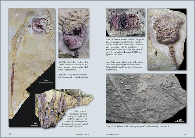 steinkernde die fossiliencommunity inhaltsangaben